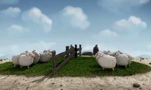 Tumult bei Schafen