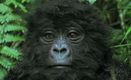 Baby Gorilla Roboter